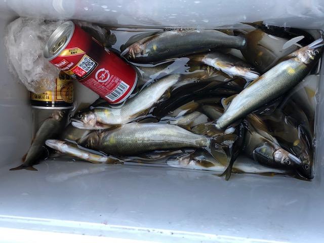 濁川釣果①
